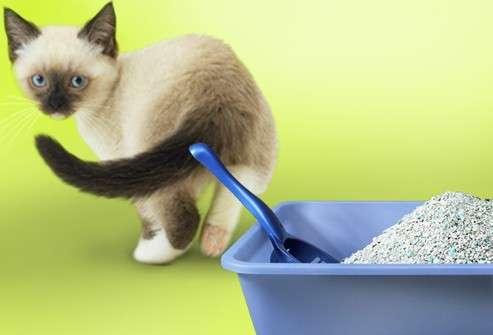 Что сделать чтобы котенок не гадил по углам